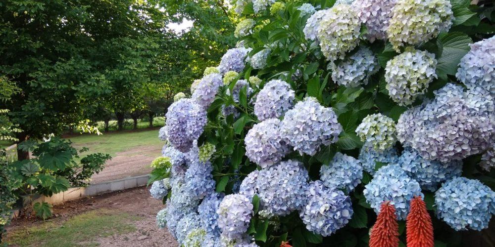 Algunas fotos del jardin